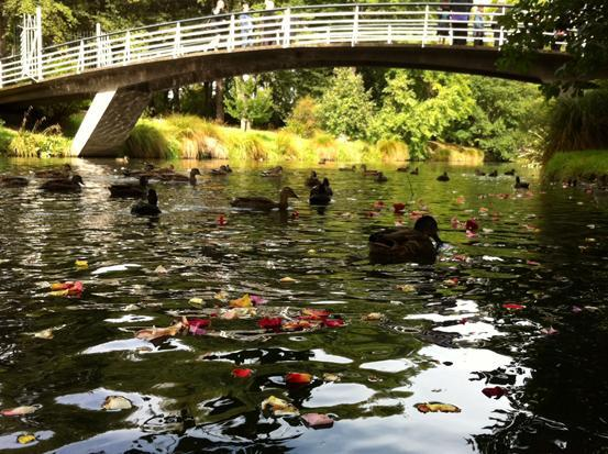 Flowers were cast in the Avon River this afternoon in tribute to the victims of the February 22 2011 quake.